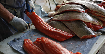 A man is filleting fresh salmon, he wears gloves and is holding a knife in one hand, and a piece of fish in the other. On the right, there is a large pile of salmon skins, and on the left is a pile of fillets.